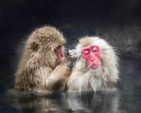 #5  Snow monkeys